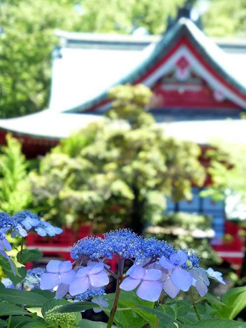 ひさびさの吉祥寺と井の頭公園_d0128697_685934.jpg