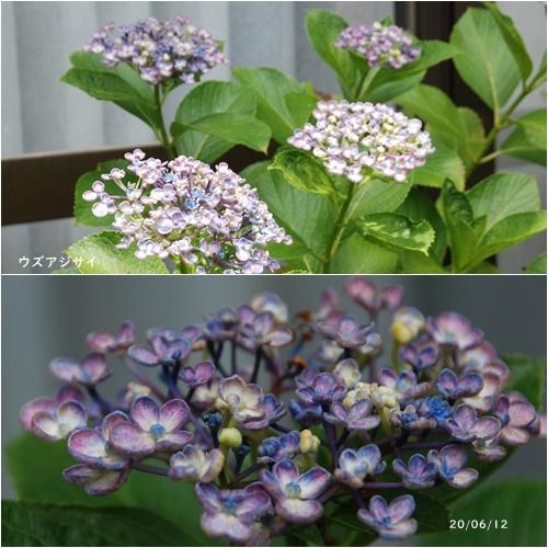 梅雨入り_c0051105_16100649.jpg