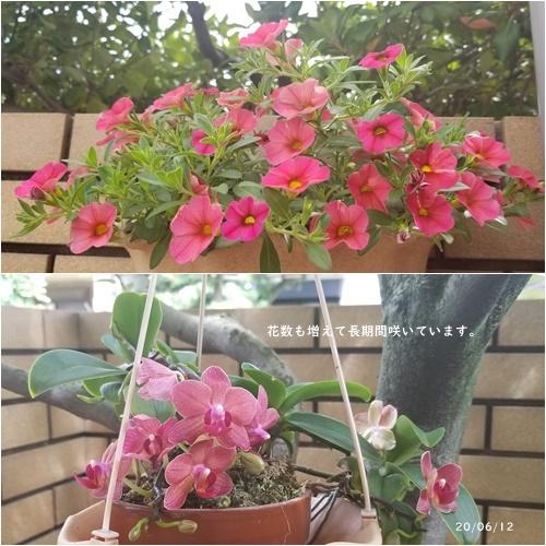 梅雨入り_c0051105_16155764.jpg