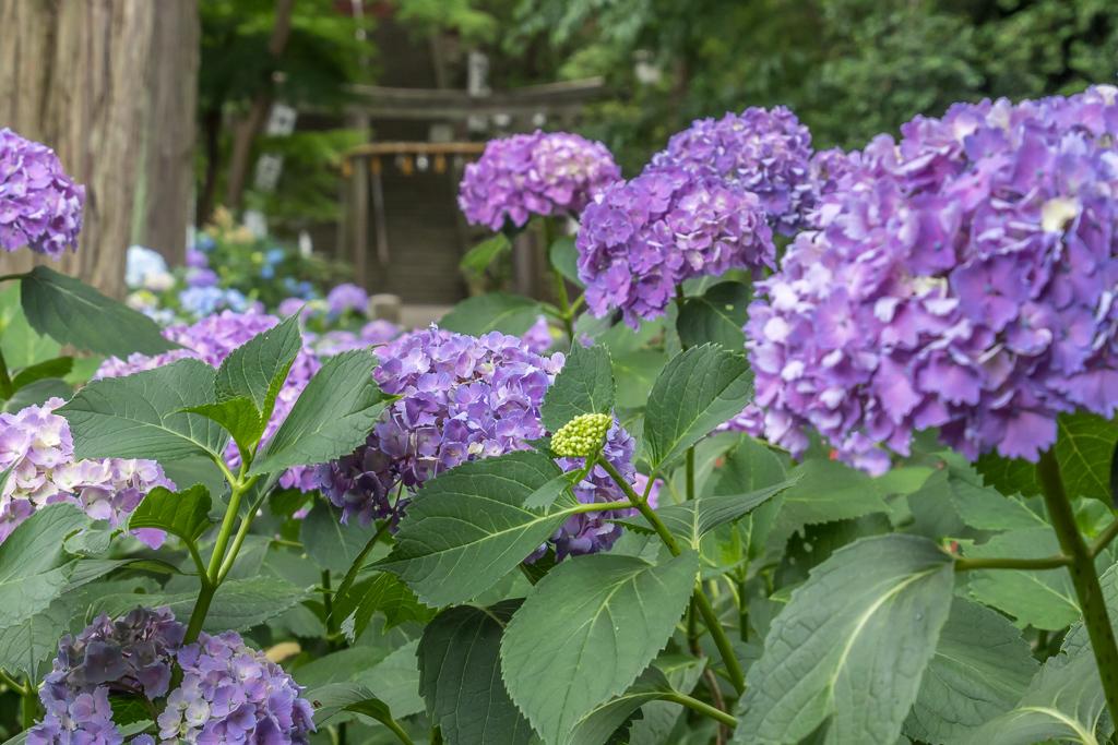 川越の街歩き写真_b0010915_19063153.jpg