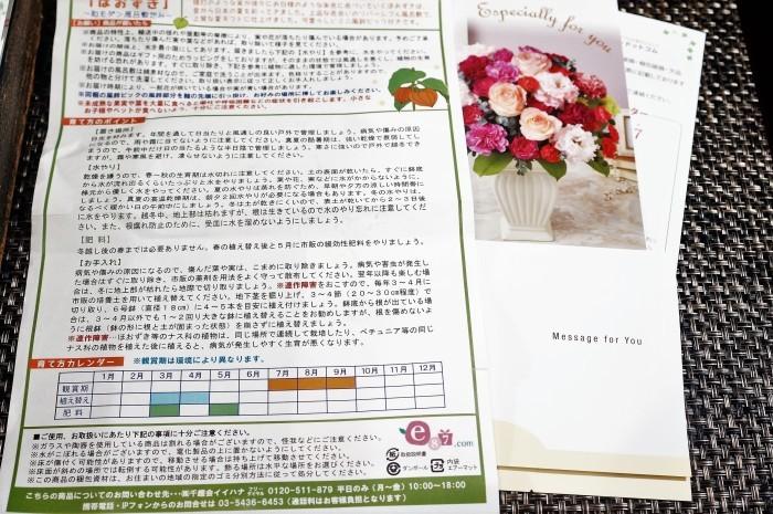 ■【新宿の娘夫婦から 素敵なほおずきの鉢植えが届きました♪】_b0033423_23073868.jpg