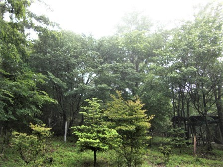 企業の森活動日記 サーラエナジー㈱ サーラの森_d0105723_07473750.jpg