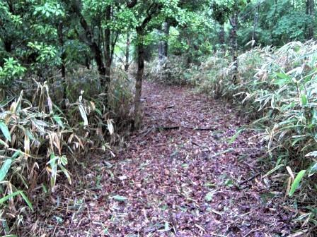 企業の森活動日記 サーラエナジー㈱ サーラの森_d0105723_07482484.jpg