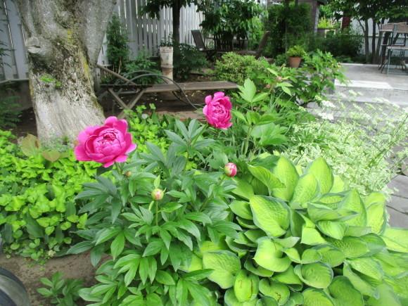 お庭のお花が色々咲きだした&豚しゃぶ_a0279743_11112972.jpg