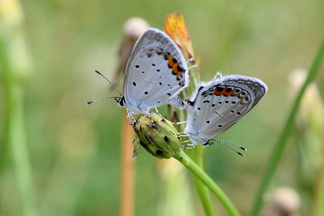 花と蝶 6/13の2_e0403850_20491284.jpg