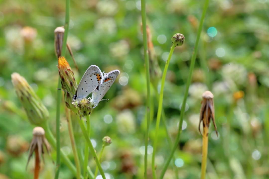 花と蝶 6/13の2_e0403850_20492640.jpg