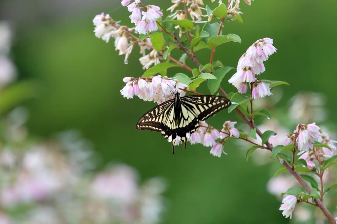 花と蝶 6/13の2_e0403850_20493623.jpg