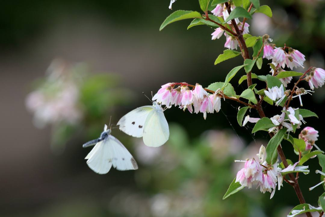 花と蝶 6/13の2_e0403850_20494038.jpg