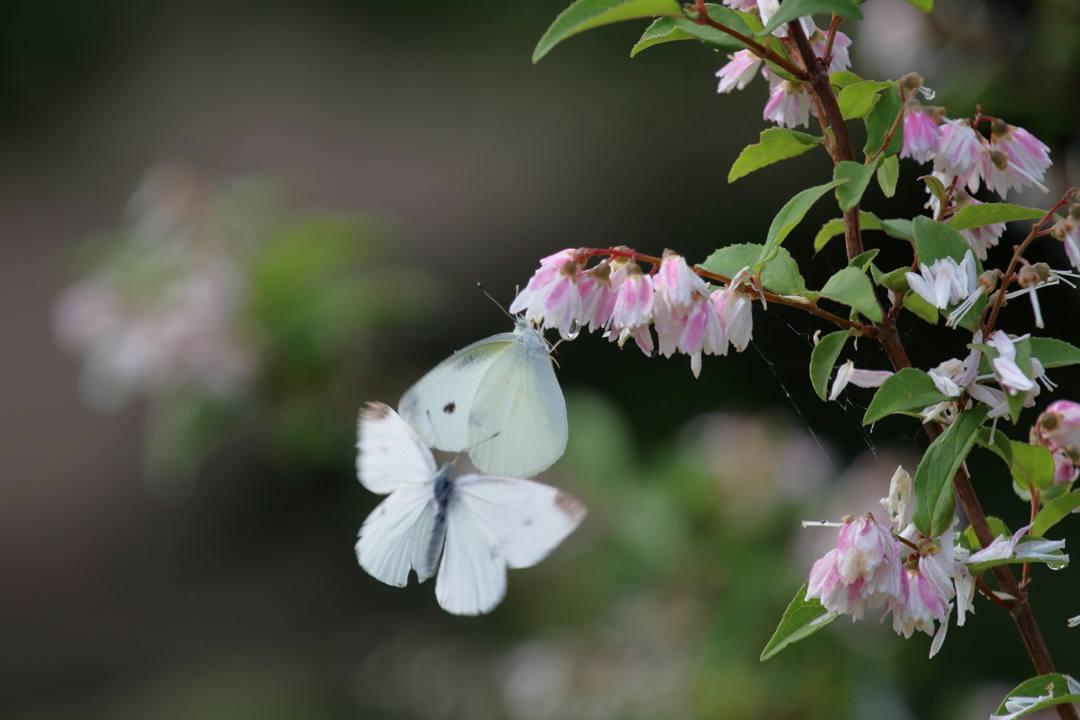花と蝶 6/13の2_e0403850_20494501.jpg