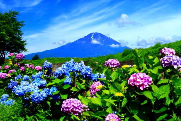 令和2年6月の富士 番外編 夏の富士_e0344396_20525595.jpg