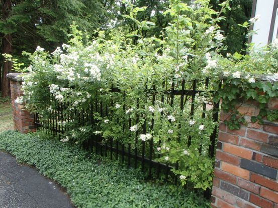 庭のバラたち_f0064906_11421269.jpg