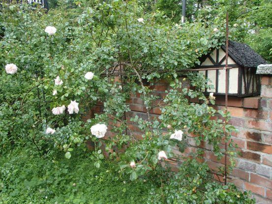 庭のバラたち_f0064906_11422184.jpg