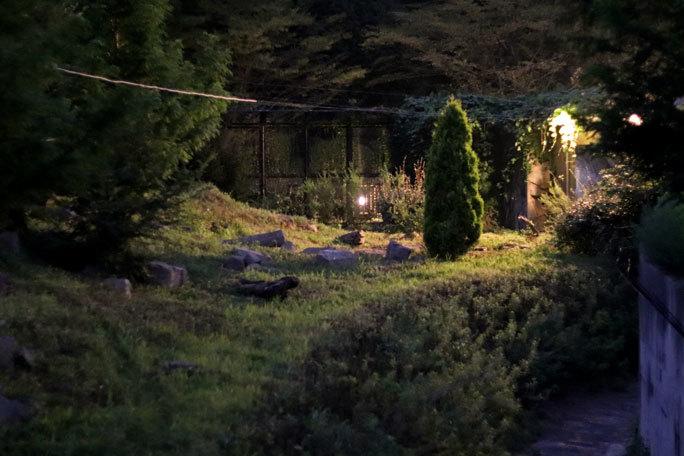 多摩動物公園サマーナイト2019④~ゴールデンターキンっ仔「ハマ」_b0355317_21574075.jpg