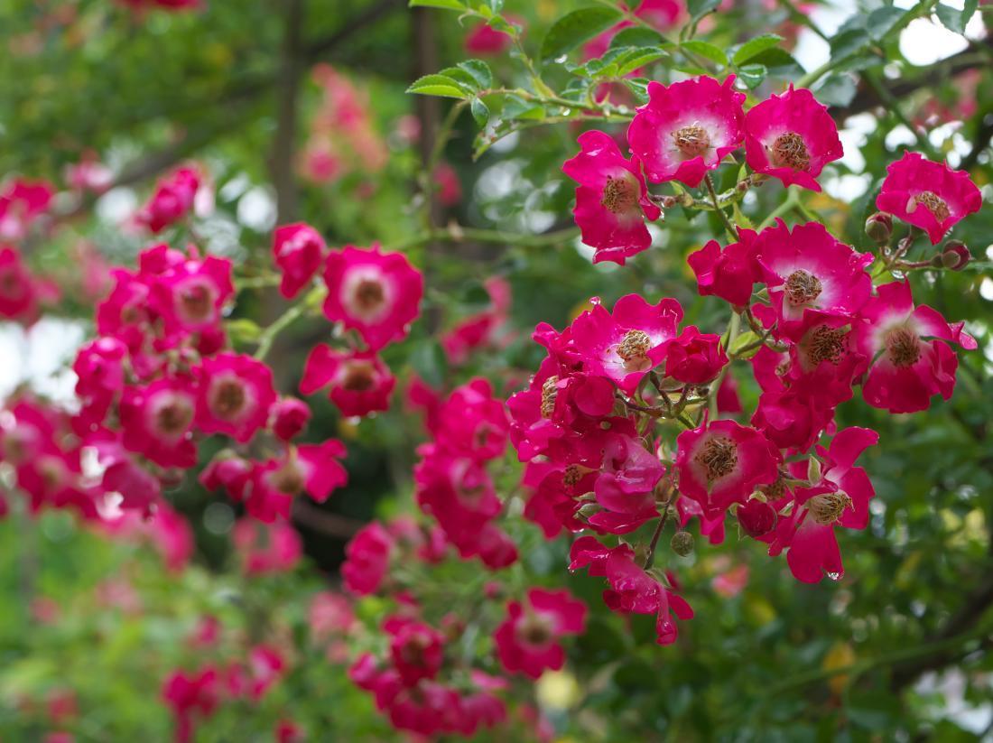 我が家の花たち_b0408917_10380377.jpg