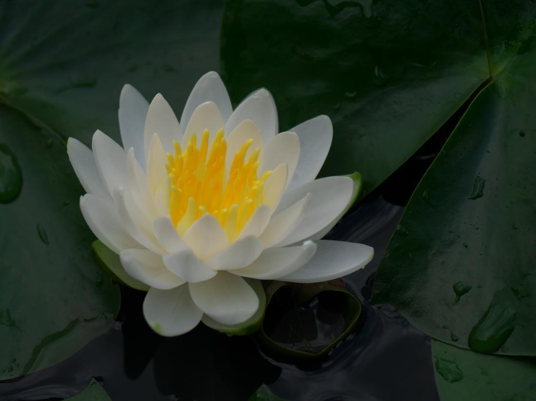 我が家の花たち_b0408917_10393155.jpg