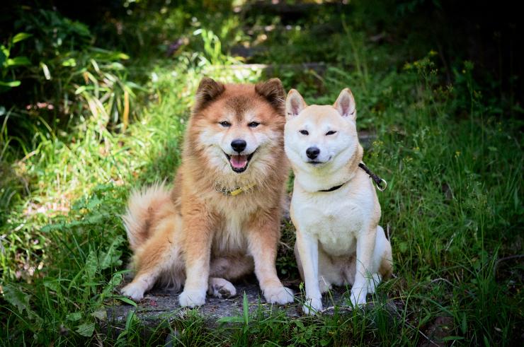 sakura&waku(2cut)_e0342136_18514562.jpg