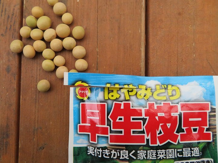 2020年6月23日 枝豆の種を蒔きました  !(^^)!_b0341140_18050186.jpg
