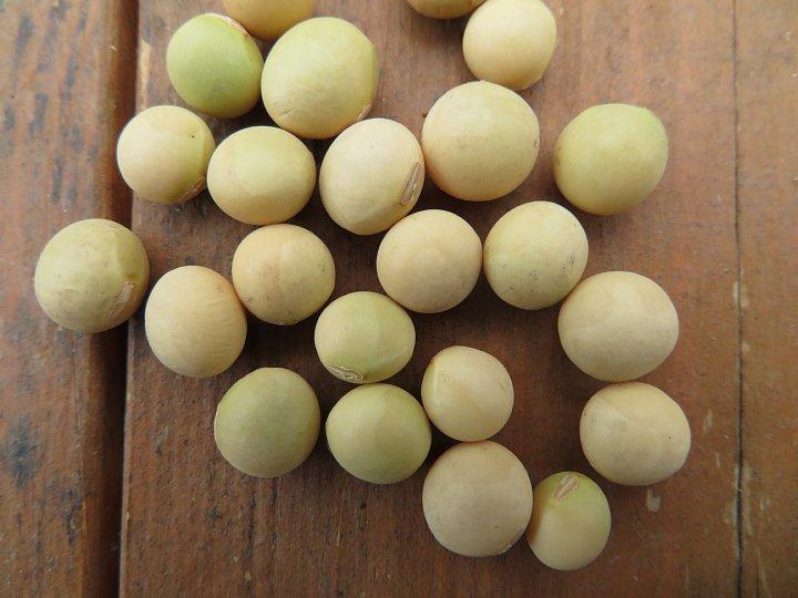 2020年6月23日 枝豆の種を蒔きました  !(^^)!_b0341140_18051218.jpg