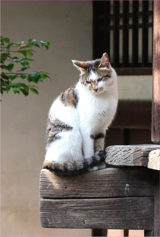 京都市中京区_b0186148_09522792.jpg