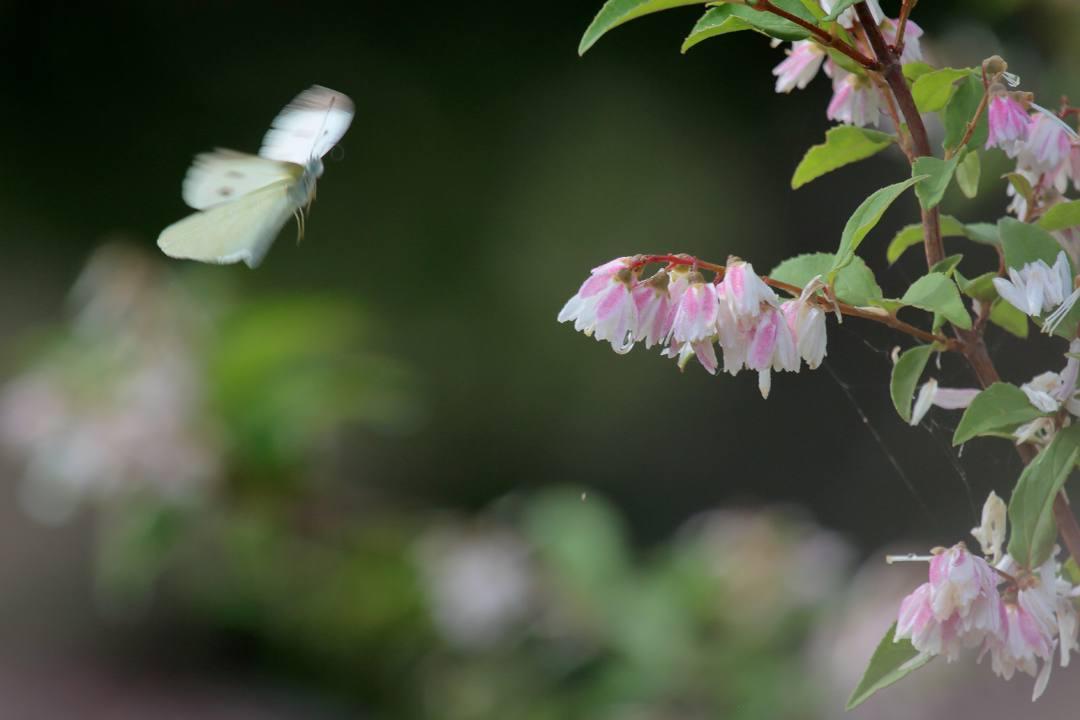 花と蝶 6/13の2_e0403850_20083259.jpg
