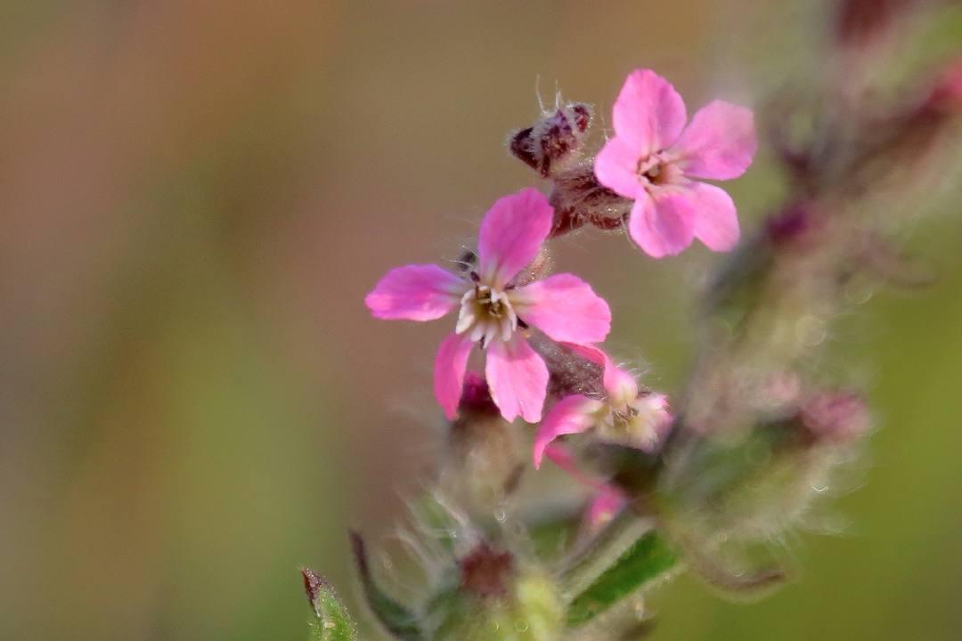 花と蝶 6/13の2_e0403850_21152965.jpg