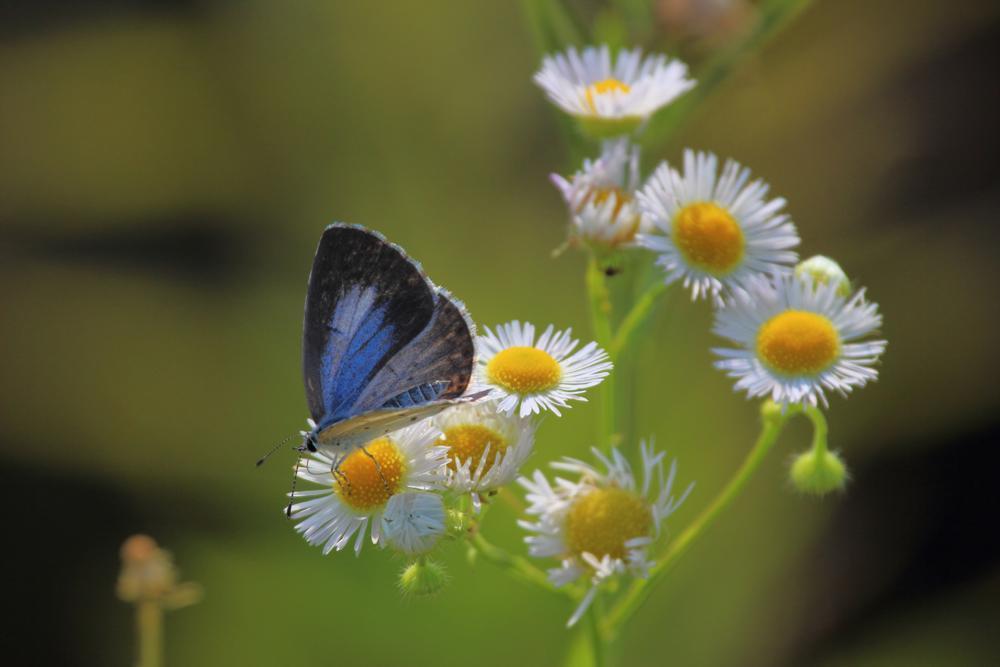 花と蝶 6/13の2_e0403850_21240961.jpg