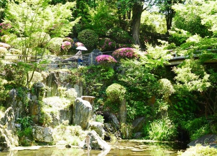 さつき咲く紅葉渓庭園  2020-06-17 00:00_b0093754_23095817.jpg