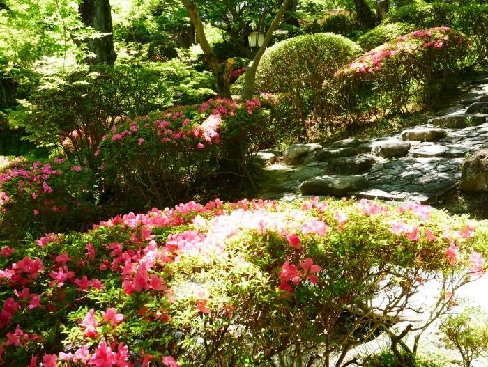 さつき咲く紅葉渓庭園  2020-06-17 00:00_b0093754_23101109.jpg