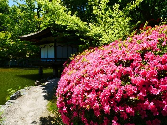 さつき咲く紅葉渓庭園  2020-06-17 00:00_b0093754_23102244.jpg