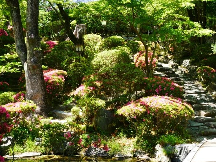 さつき咲く紅葉渓庭園  2020-06-17 00:00_b0093754_23104675.jpg