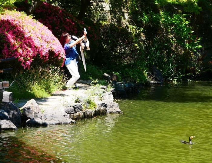 さつき咲く紅葉渓庭園  2020-06-17 00:00_b0093754_23111081.jpg