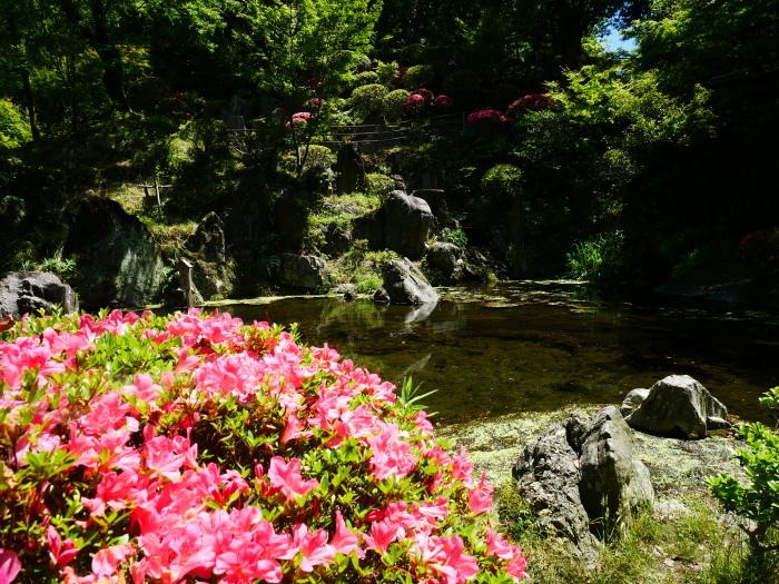 さつき咲く紅葉渓庭園  2020-06-17 00:00_b0093754_23112938.jpg