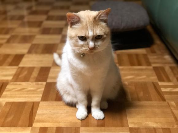 猫のおもちゃが増えるわけ_d0085254_23145660.jpg