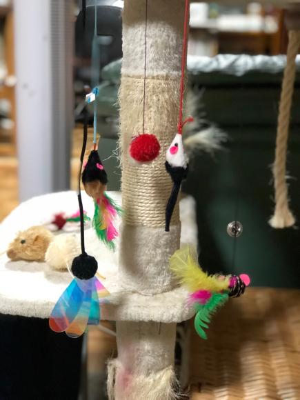 猫のおもちゃが増えるわけ_d0085254_23230107.jpg