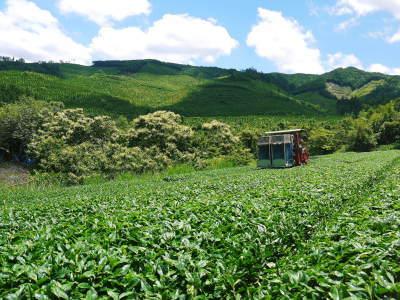 菊池水源茶 令和2年度の茶摘みの様子!こだわりの有機栽培のお茶の茶摘みを取材しました!_a0254656_14553175.jpg