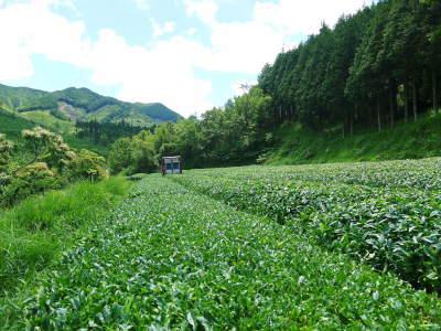 菊池水源茶 令和2年度の茶摘みの様子!こだわりの有機栽培のお茶の茶摘みを取材しました!_a0254656_15022179.jpg
