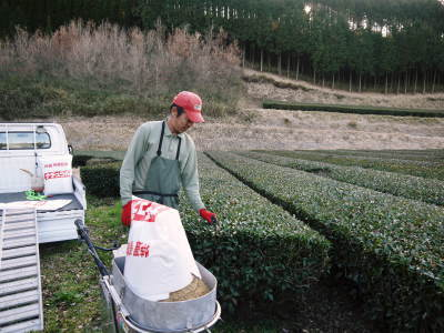 菊池水源茶 令和2年度の茶摘みの様子!こだわりの有機栽培のお茶の茶摘みを取材しました!_a0254656_15132873.jpg