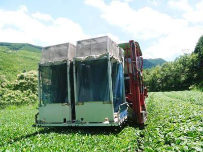 菊池水源茶 令和2年度の茶摘みの様子!こだわりの有機栽培のお茶の茶摘みを取材しました!_a0254656_15285726.jpg