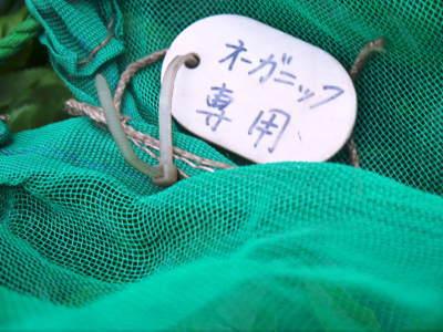 菊池水源茶 令和2年度の茶摘みの様子!こだわりの有機栽培のお茶の茶摘みを取材しました!_a0254656_15323527.jpg