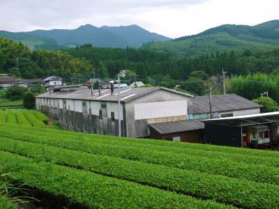 菊池水源茶 令和2年度の茶摘みの様子!こだわりの有機栽培のお茶の茶摘みを取材しました!_a0254656_15364438.jpg