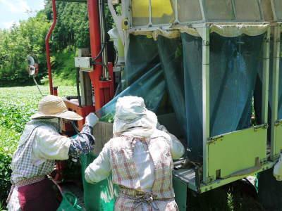 菊池水源茶 令和2年度の茶摘みの様子!こだわりの有機栽培のお茶の茶摘みを取材しました!_a0254656_15411586.jpg