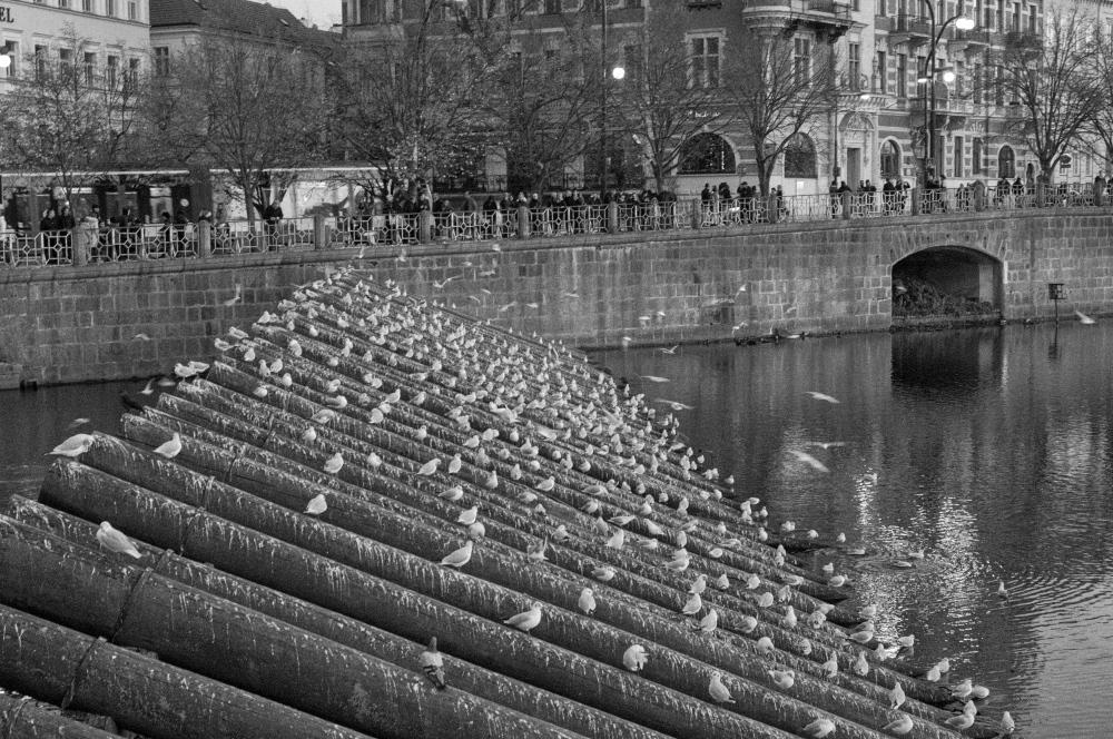 A moment in Prague #60 - 鳥たちの溜まり場 -_d0349265_14310134.jpg