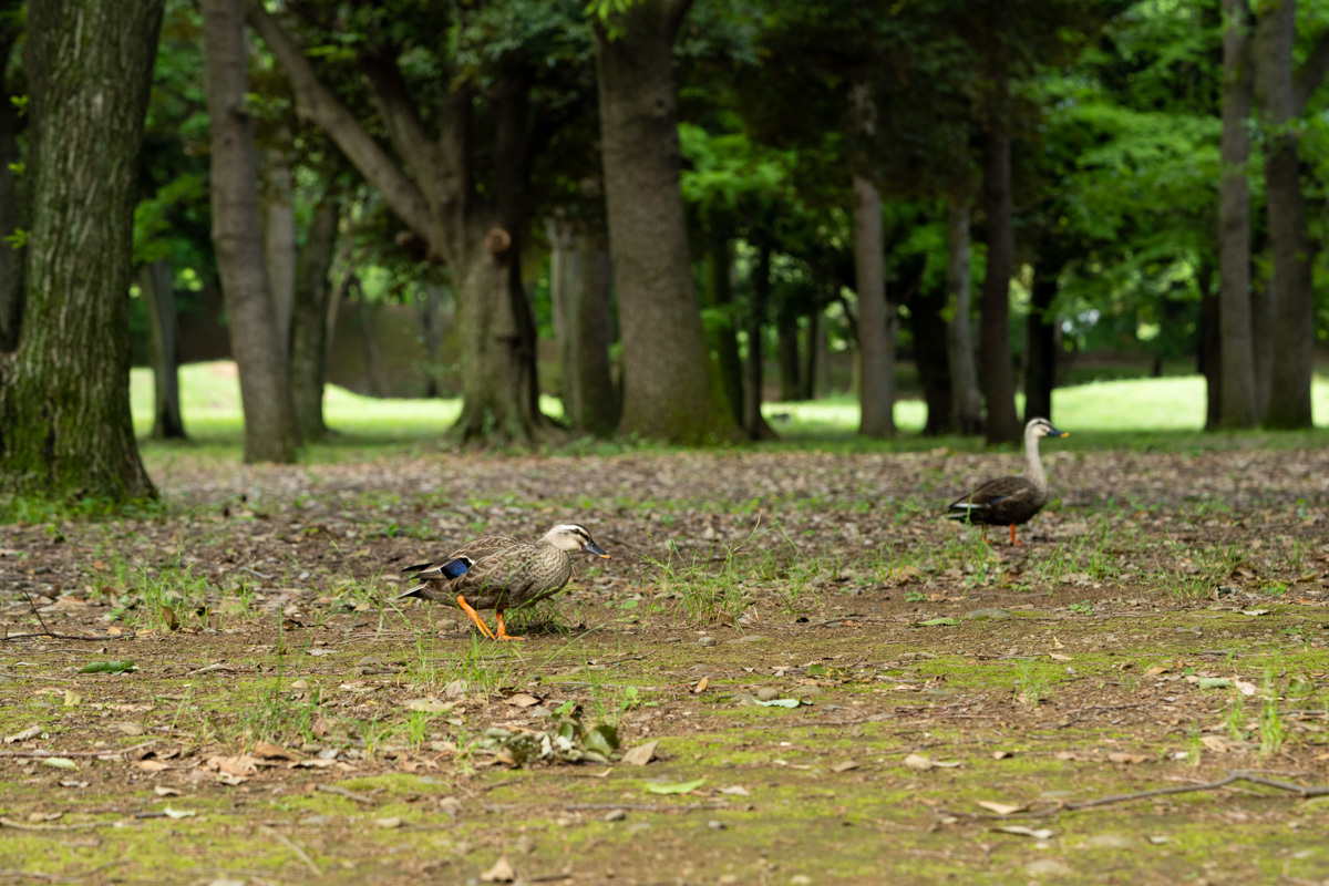 池より森の散歩_a0261169_02121787.jpg
