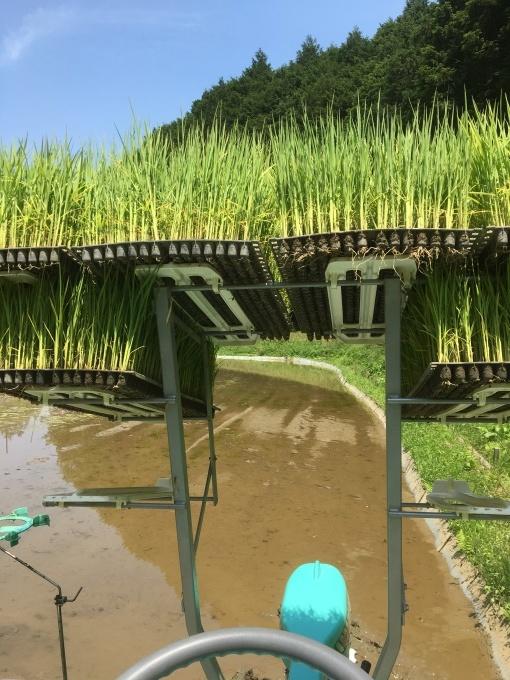 2020年度の米作り_e0151471_11060312.jpeg
