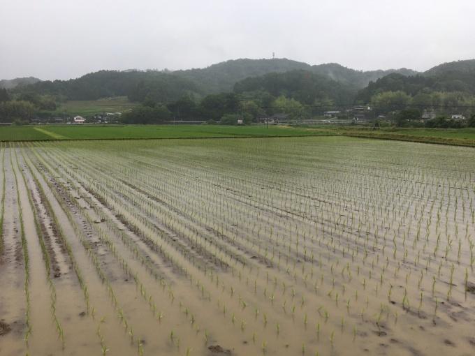 2020年度の米作り_e0151471_11065123.jpeg