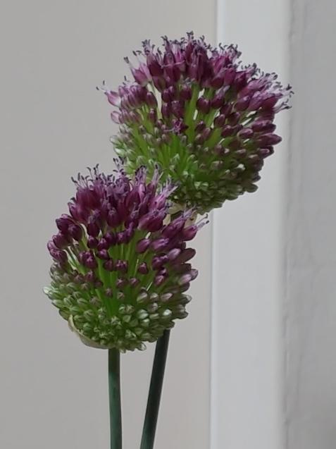 この花は?_c0162773_21360945.jpg