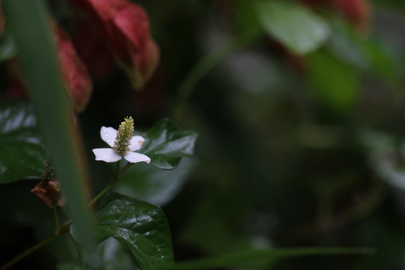 雨の日     <   庭の花たち   >_a0140000_11171805.jpg
