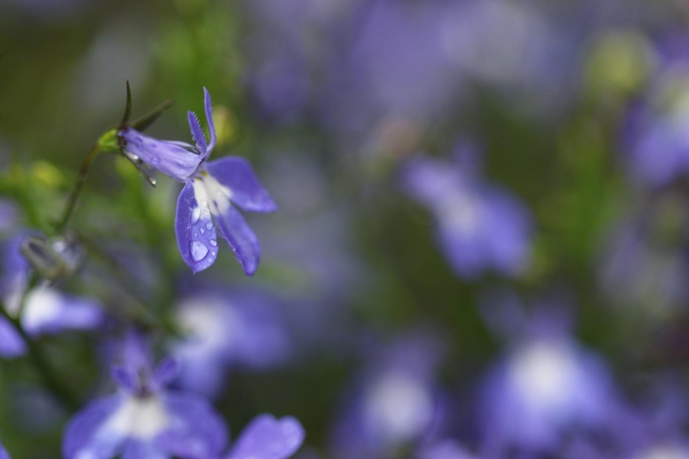 雨の日     <   庭の花たち   >_a0140000_11192470.jpg