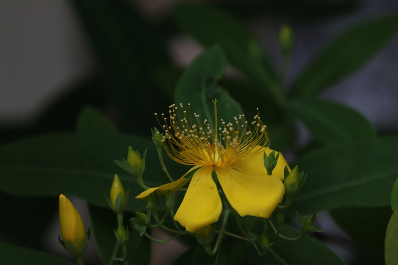 雨の日     <   庭の花たち   >_a0140000_11211413.jpg