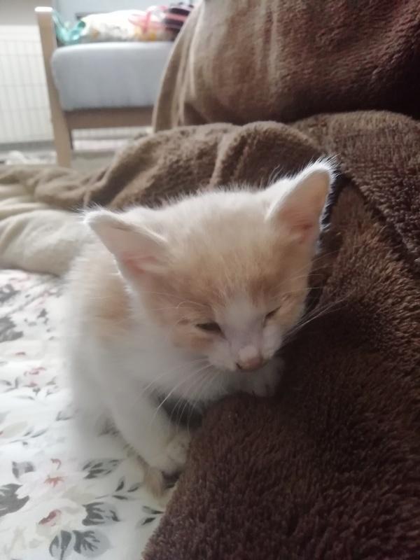こんな猫ちゃんでした_f0052907_22581357.jpg